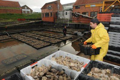 Er wordt veel werk verzet in de oesterputten - Foto Willem Woznitz - laatzeelandzien.nl