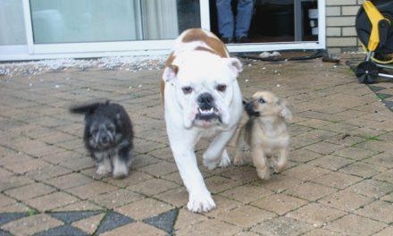 Dieren, dierbenodigdheden, dierenverzorging en dierenartsen