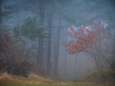 Mistige dag - Foto Leen Koper