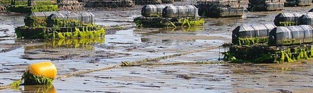 Nieuwe ontwikkelingen in de oestercultuur