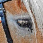 5 juni – Paardenmarkt Zierikzee