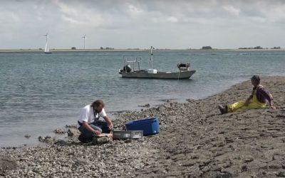 Arkenbout scharrelt zijn kostke bij elkaar - foto Omroep Zeeland
