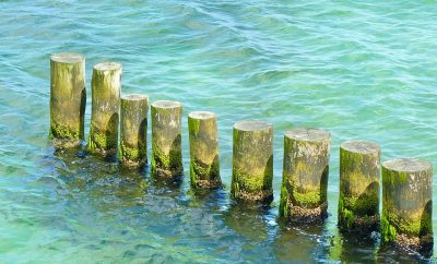 Begroeide strandpalen