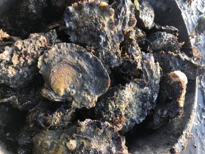 Beroemde Zeeuwse oesters