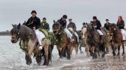 Boeren met hun paarden in de zee