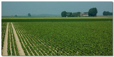 De nieuwe polder