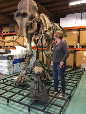 Hester en fossielen