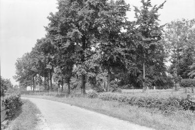 Het met bomen omzoomde kerkhof van Eversdijk