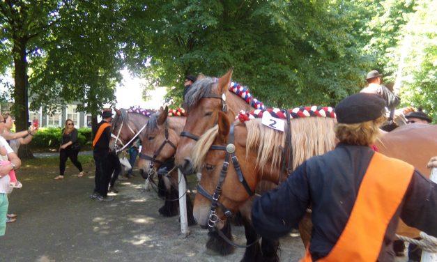 6 juni – Paardenmarkt Zierikzee.