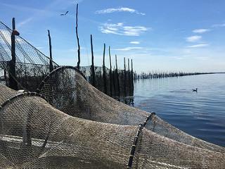Vaartochten naar de weervisserij op de Oosterschelde