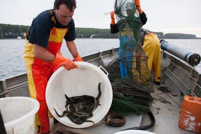 Palingvissers op het Veerse Meer - Foto Desiree Meulemans