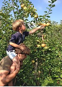 Sappige appels, eventueel zelf plukken - Foto Hans Vink