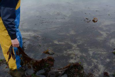 Schone stranden en schoon water, een must