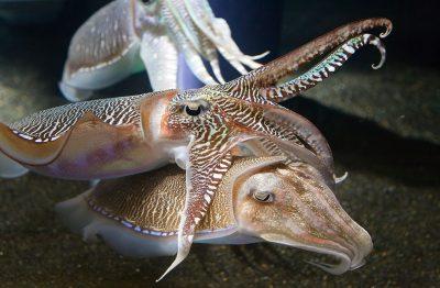 Sepia of zeekatten - foto Diliff - httpscommons.wikimedia.org