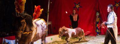 Vertederende paardjes
