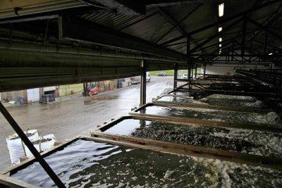 Verwaterbassin waain de mosselen continue worden gespoeld met vers zeewater uit de Oosterschelde - Foto: Ben Biondina - laatzeelandzien.nl