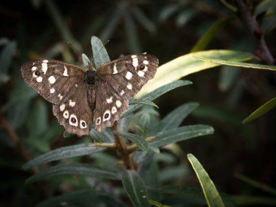 Vlindertje op Neeltje Jans - © Aren Admiraal