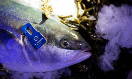 Officiële opening Kingfish Zeeland B.V.