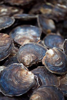 Zeeuwse platte oesters