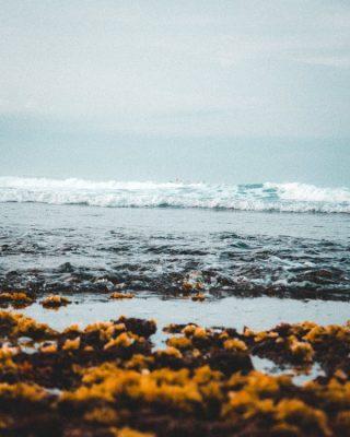 Zeewier, gratis aan de kust