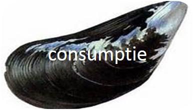 consumptiemossel
