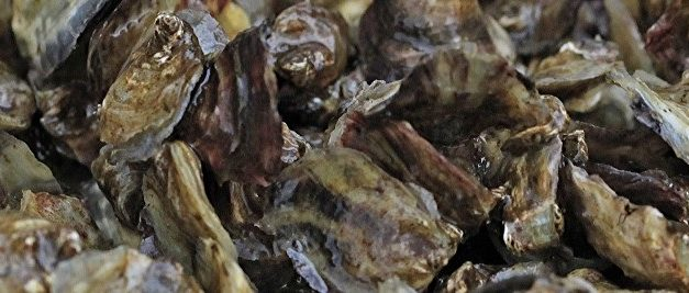 De oesterkweek- en visserij