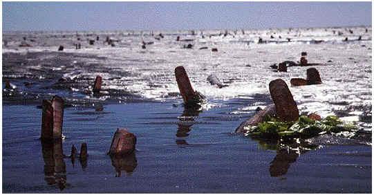 Mesheften: een (nog onbekende) Zeeuwse lekkernij!