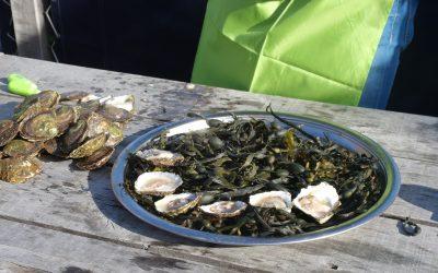 Wordt Bruinisse, naast mosseldorp, nu ook oesterdorp?