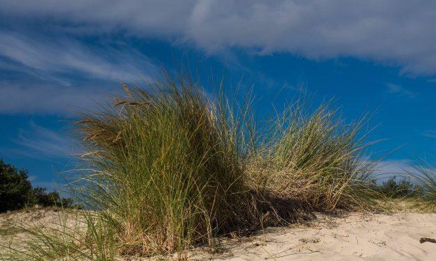 Nederlandse stranden zijn stroken stuifzand. Veranderen?