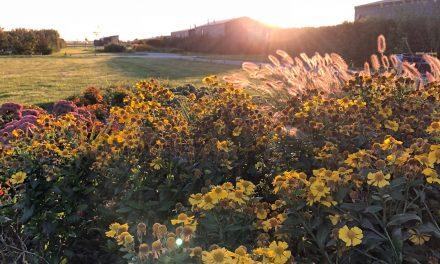 Buitenplaats Oudendijke – Vakantie op Schouwen-Duiveland, maar dan net even anders