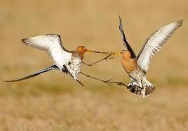 zeldzame vogelsoorten